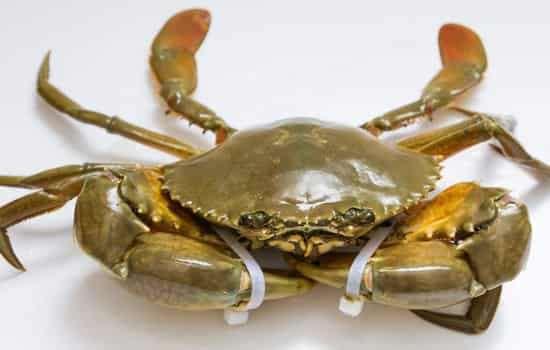 青蟹死了还能吃吗