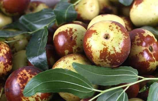 冬枣是什么季节的 早熟冬枣和正常成熟冬枣有何区别