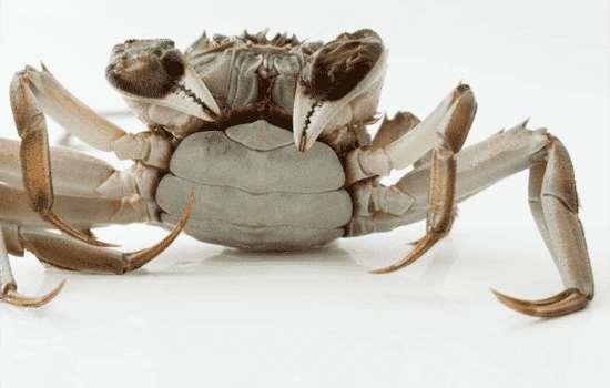 螃蟹吃多了会流鼻血吗
