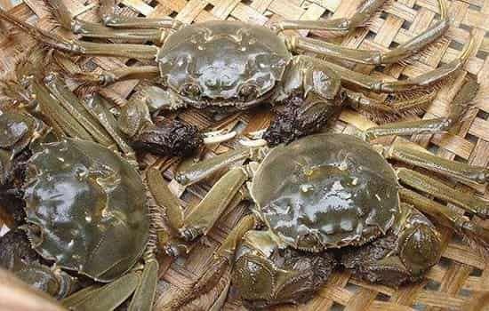 阳澄湖大闸蟹和普通大闸蟹的区别