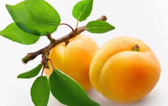 黄桃和杏子的区别