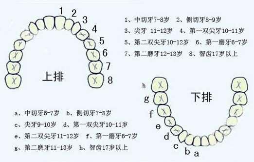 宝宝换牙顺序图 帮家长了解正常换牙顺序