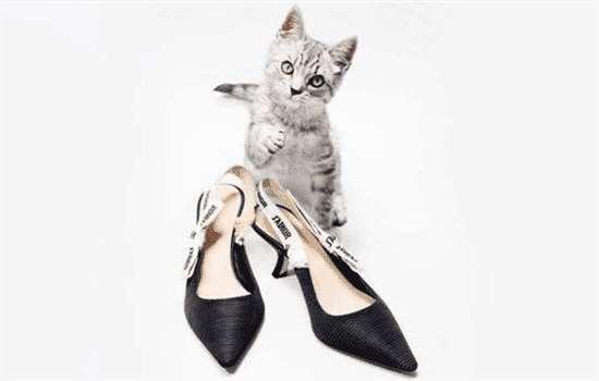 猫跟鞋适合什么年龄
