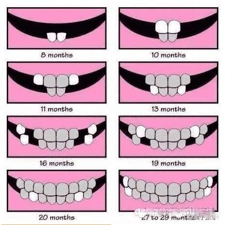 牙齿萌出顺序