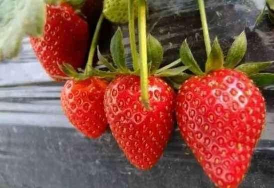 吃什么水果减肥最快 这些水果越吃越瘦