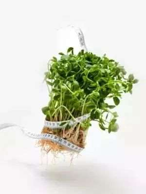 绿豆芽怎么吃减肥 它的减肥原理是什么