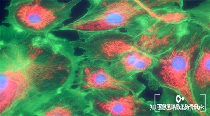 皮肤干细胞除皱是肌肤再年轻的秘密