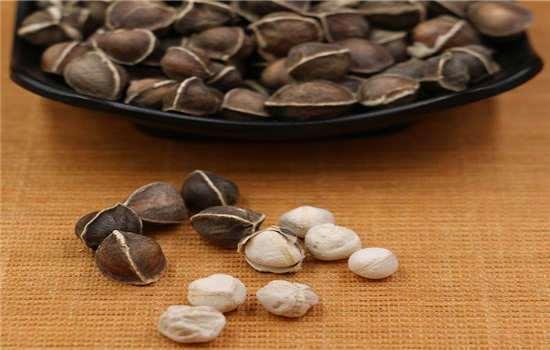 辣木籽有哪些服用方法
