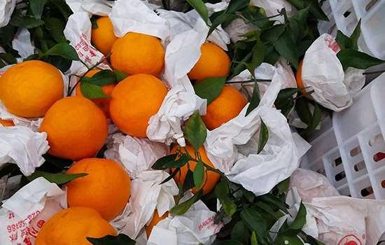 耙耙柑的耙是什么意思 好柑甜自天府之国