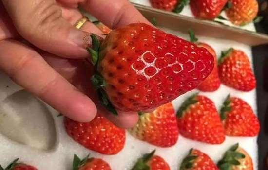 丹东草莓和丹东99的区别 丹东草莓的种类有哪些