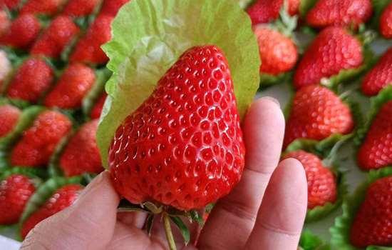 洗过的草莓第二天还能吃吗 洗过的草莓怎么保存到第二天