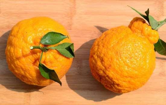 丑橘到底上火不上 丑橘是上火的还是去火的