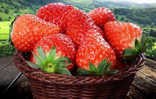 """丹东草莓为什么这么好吃 丹东99草莓不愧是""""水果皇后"""""""