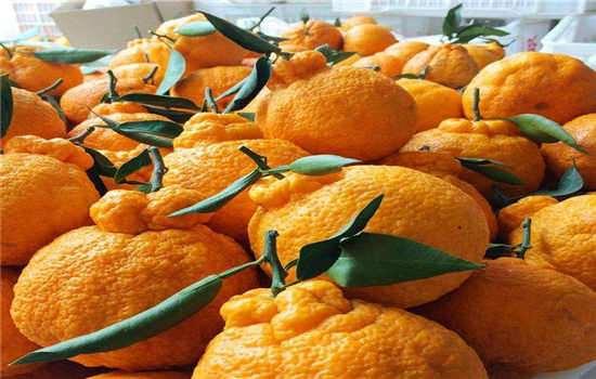 丑橘几月份算应季