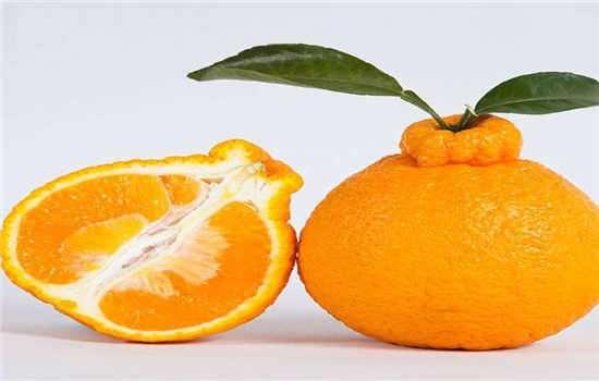 怎么挑选好吃的丑橘