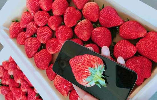 草莓没洗就吃了有事吗 草莓怎么洗才干净又不坏