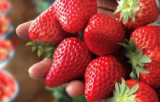 草莓会不会打很多农药 草莓上用农药很厉害吗
