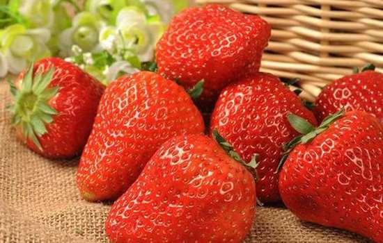 丹东99草莓打农药吗 丹东99草莓采取的是无公害种植