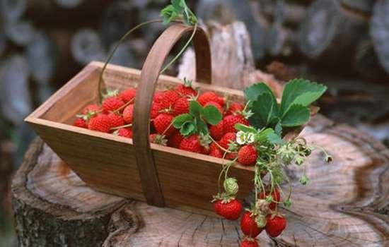 草莓用盐水泡要泡多少时间 草莓用盐水泡烂了还能吃吗