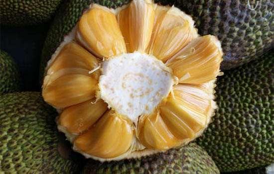 菠萝蜜干苞和湿苞的区别 菠萝蜜干苞和湿苞哪个好吃
