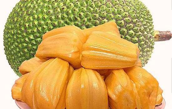 剥好的菠萝蜜要放冰箱保鲜吗 剥好的菠萝蜜可以保存多久