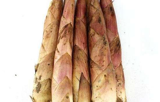 春笋和冬笋是同一棵竹子长的吗 春笋和冬笋的区别在哪里