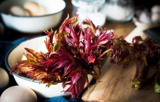 新鲜香椿怎么处理 香椿怎么吃最安全