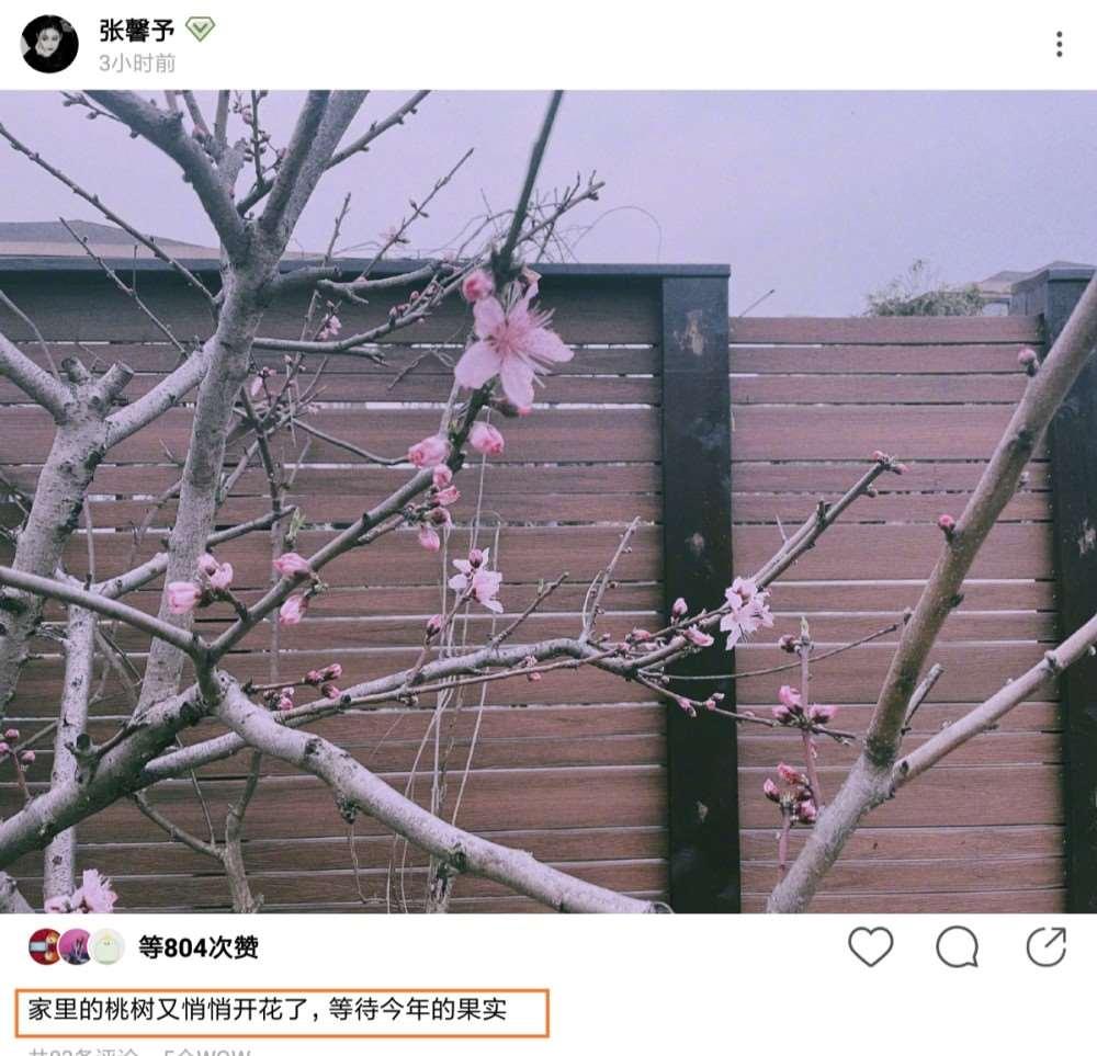 张馨予发文:家里的桃树又悄悄开花了,等待今年的果实,看到照片要坐不住了_明星新闻