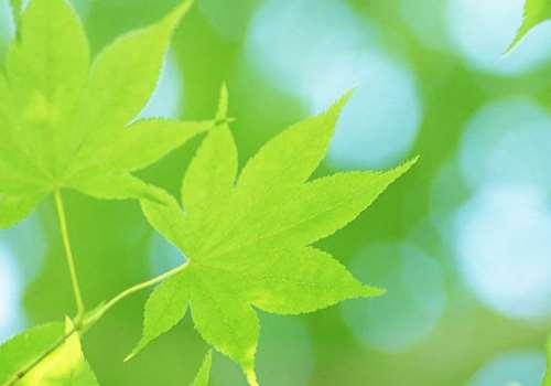 孕孕妇梦见梧桐树有什么寓意 孕妇梦见梧桐树是胎梦吗