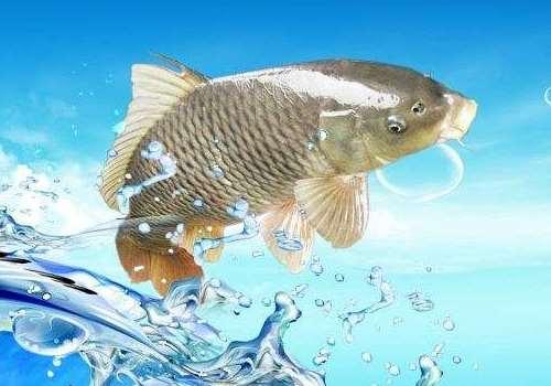孕妇梦见鲫鱼是什么意思 孕妇梦见鲫鱼是生男生女