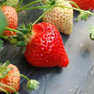 孕妇流鼻血吃什么水果好 孕妇流鼻血如何调理
