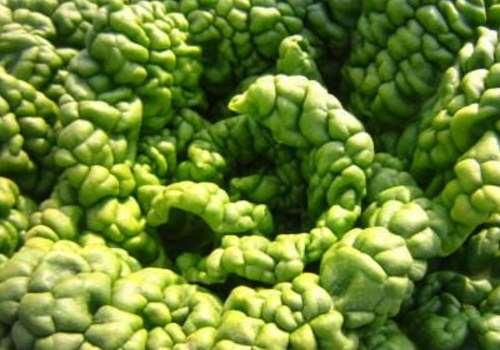 黄心乌是什么菜 黄心乌什么时候种植