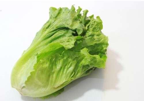 煮熟的生菜可以放冰箱吗 生菜和西生菜哪个营养价值高