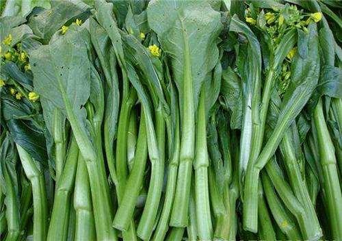 白菜苔的功效与作用 白菜苔怎么保存