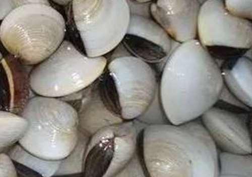 文蛤是海鲜还是河鲜 文蛤是淡水还是海水
