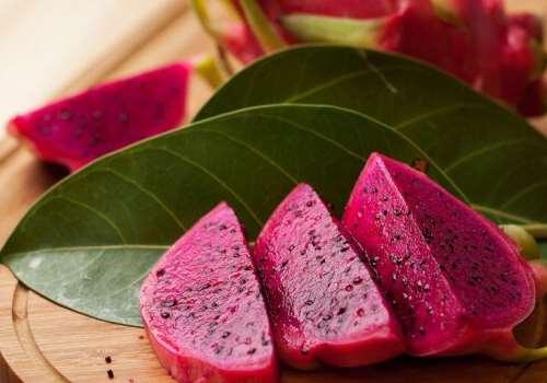 火龙果什么时间种 火龙果种植方法有哪些