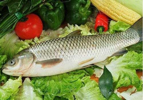 草鱼可以炖汤喝吗 草鱼可以冷冻吗
