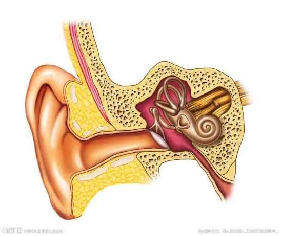 耳朵后面长了个硬包怎么办 耳朵后面长了个硬包怎么调理