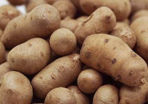 山药豆怎么吃 山药豆发芽还能吃吗
