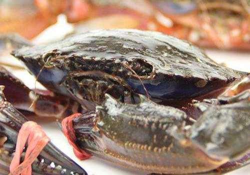 海虹蟹是海螃蟹吗 海虹蟹蒸多久可以吃