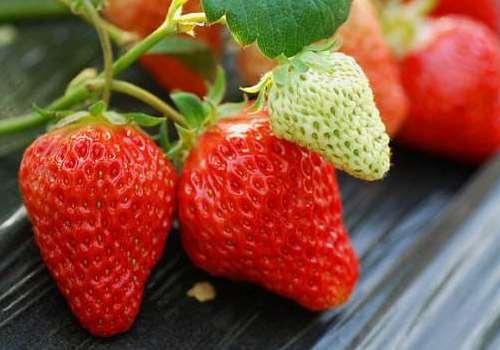 怀孕5个月可以吃草莓吗 怀孕5个月吃草莓的注意事项