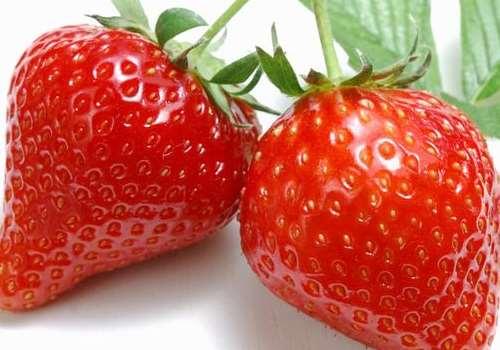 吃草莓的最佳时间 草莓几月份成熟上市