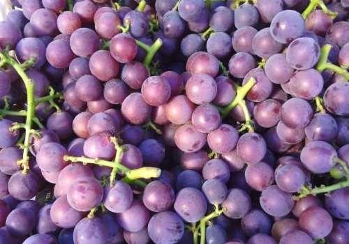 巨峰葡萄怎么保存 巨峰葡萄功效与作用有哪些