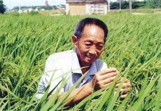 袁隆平去世享年91岁,赵薇、李晨、黄晓明等众星发声悼念:一路走好_明星新闻