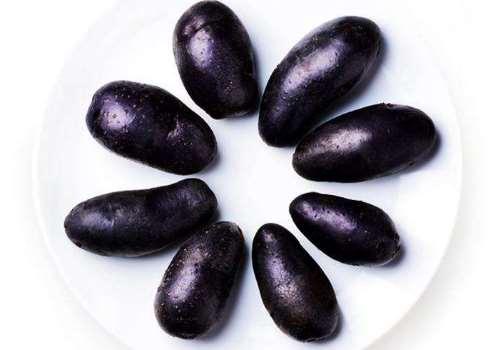 紫土豆产地在哪里 紫土豆种子哪里有卖