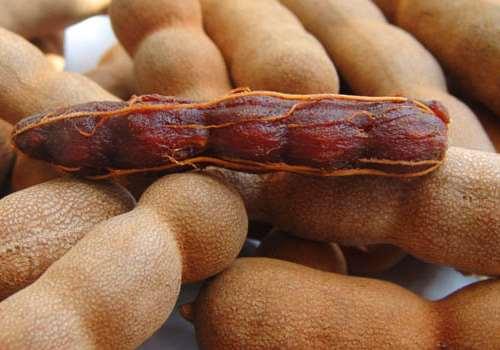 甜角什么时候播种 甜角种植方法介绍
