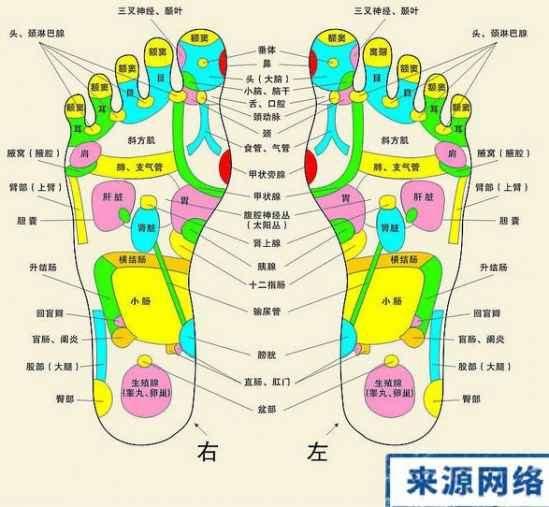 脚底按摩穴位图 脚底按摩能减肥吗