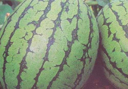 西瓜是酸性还是碱性 西瓜是减肥还是增肥