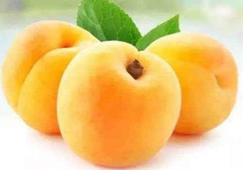 黄桃怎么变软 黄桃是软的还是硬的