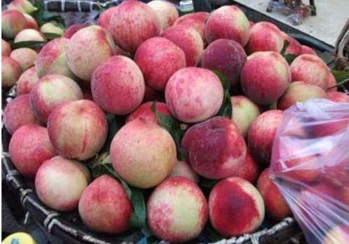 桃子放冰箱保存好还是常温保存好 桃子常温下能放多久